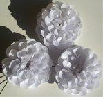 Jiřina vosková pomponkovitá bílá 1