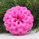 Jiřina vosková pomponkovitá růžová 2
