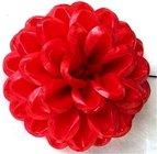 Jiřina vosková pomponkovitá červená 3