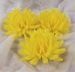 Jiřina vosková velká žlutá