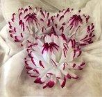 Jiřina vosková velká bíločervená
