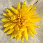 Jiřina vosková malá  žlutá