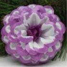 Jiřina vosková pomponkovitá bílá, fialový okraj