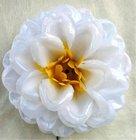 Jiřina vosková pomponkovitá bílá, žlutý střed