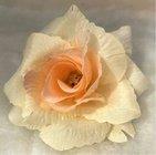 Růže látková oranžovobílá
