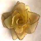 Růže látková žlutohnědá