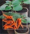 SEMO Klipsy plastové na roubování okurek a melounů 5ks